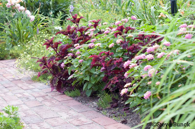 Victorian Flower Garden